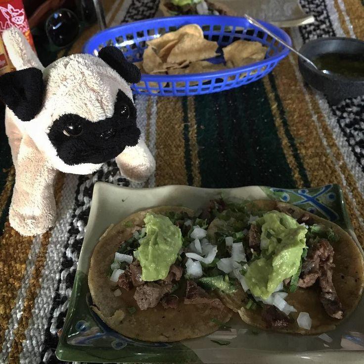Mr. Pug enjoys a couple steak tacos at Nelson Restaurante on Avenida Revolućion in Tijuana, Mexico.   #dogs #traveling #travel #bajacalifornia #mexico #tijuana #mrpug #pugs #tacos #mexicanfood #foodporn #mexican