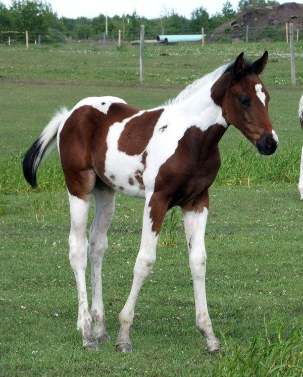 2014 Foals - HPH Ima Smokin' Lily