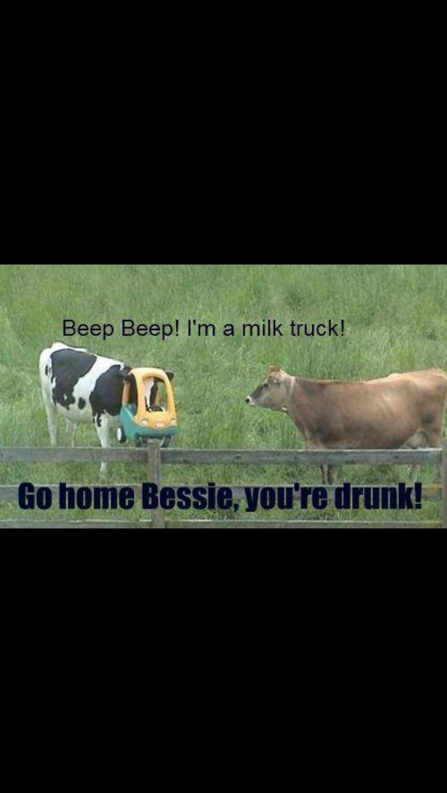 1c1bc3ee3b1a6d74f0e072892e002bea so funny funny shit 66 best your drunk, go home images on pinterest funny shit,Go Home Bessie You Re Drunk Meme