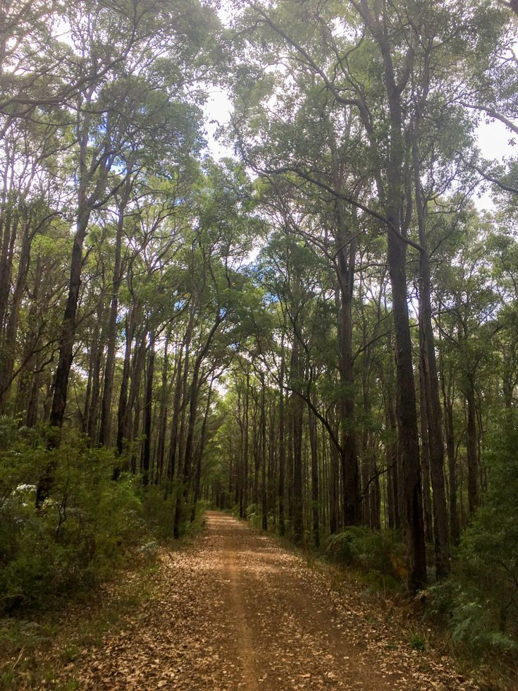 Cycling the Wadandi Track from Cowaramup to Margaret River in Western Australia is a great way to experience the south west region. Read about the track at GetawayWA.