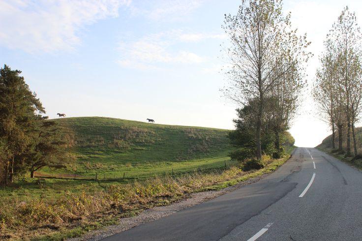 Landscabe from Mols Bjerge in Denmark  #landscape #horses
