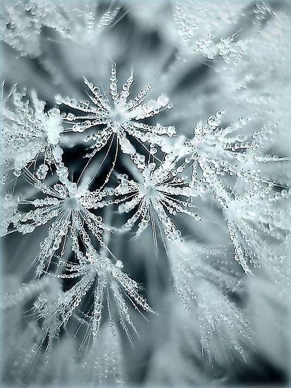 zosia24:  Морозный Дженнифер Поттер
