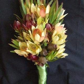 Australian Native Flowers - Leucadendron & Eucalyptus Pods