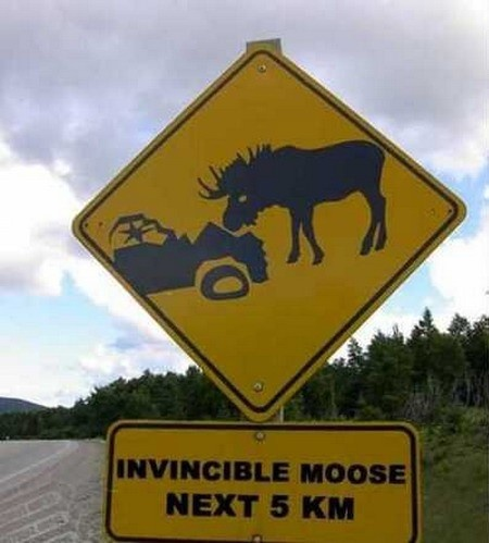Invincible moose, next 5km.