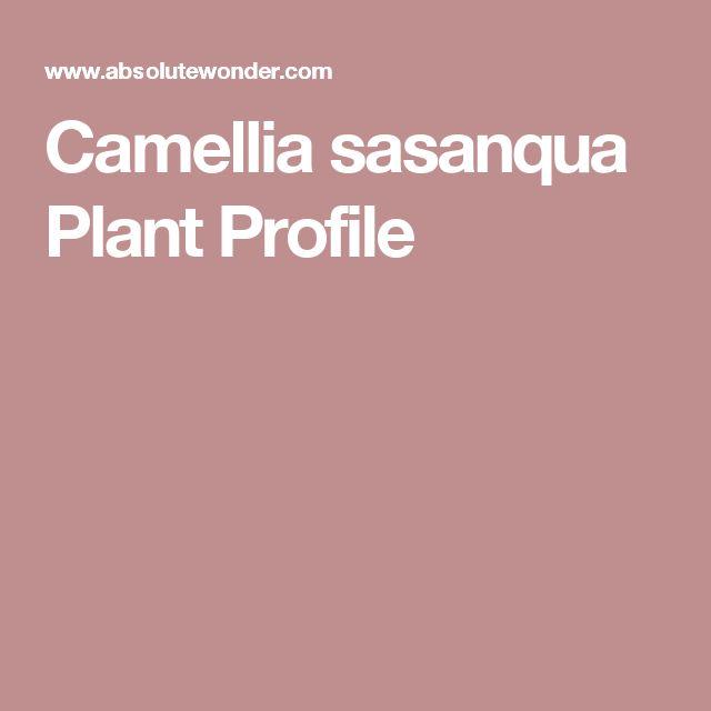 Camellia sasanqua Plant Profile