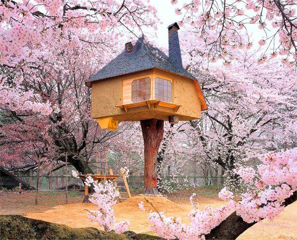 tree house japan intro