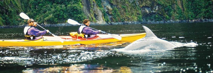 Milford sound - kayaking with dolphins