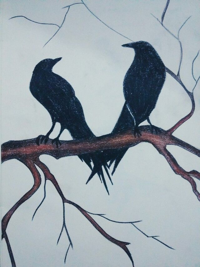 Love birds Pencil colors
