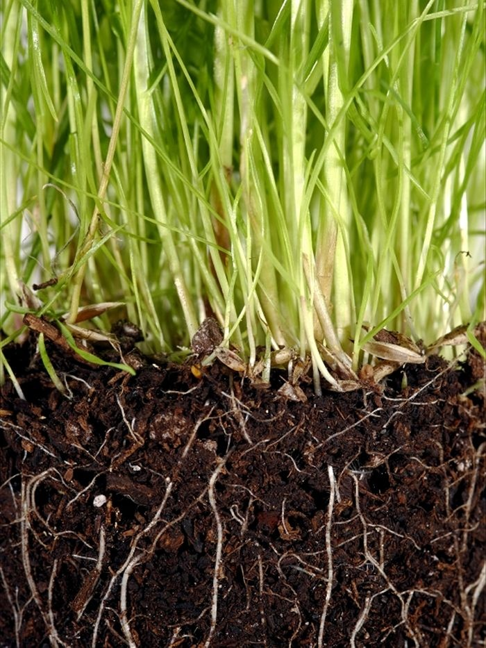 Soil fungi may not be effective carbon sink