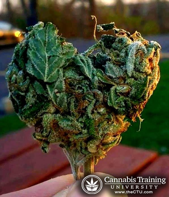 how to start a cannabis testing lab alberta
