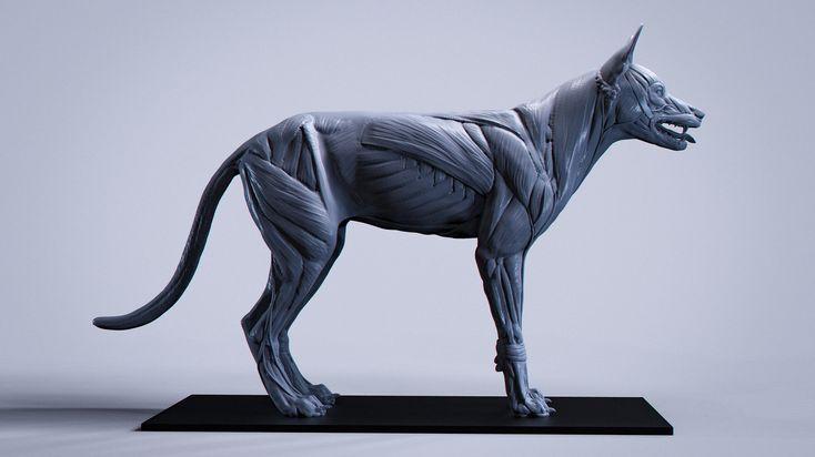 76 besten Animal Anatomy Reference Bilder auf Pinterest ...