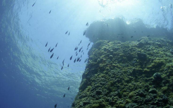 Sukelluskokeilu. Kroatia on sukellusparatiisi sekä ammattilaisille että aloitteleville sukeltajille.  Koe uudenlainen lomakokemus - ja ehkä saat sukelluskärpäsen pureman. www.apollomatkat.fi #Kroatia