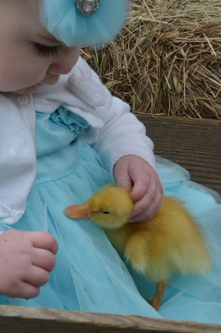 Both are adorable.  This brings back memories of Easter long ago.  Back then, it was common for children to get pastel-colored baby chicks for Easter as pets.