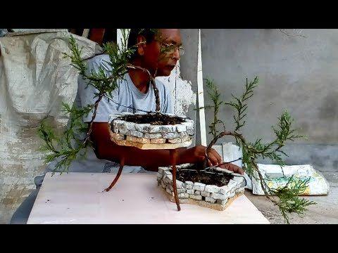 Crafting Juniper tree for bonsai - YouTube
