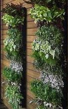 Vertical gardening 1- for those who have limited space.
