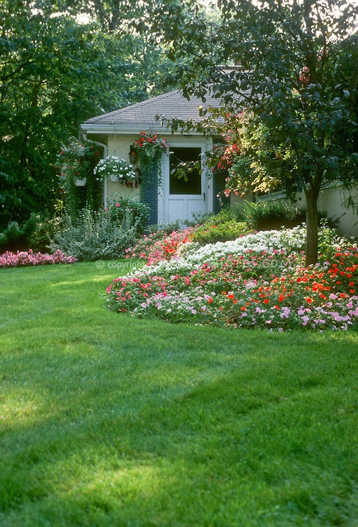 Shade Garden Landscaping With Impatiens Used In Mass Groundcover, Trees,  House, Lawn Grass