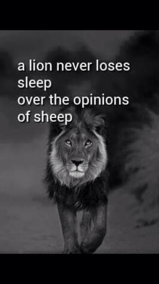 The lion never losses sleep over the opinions of a sheep