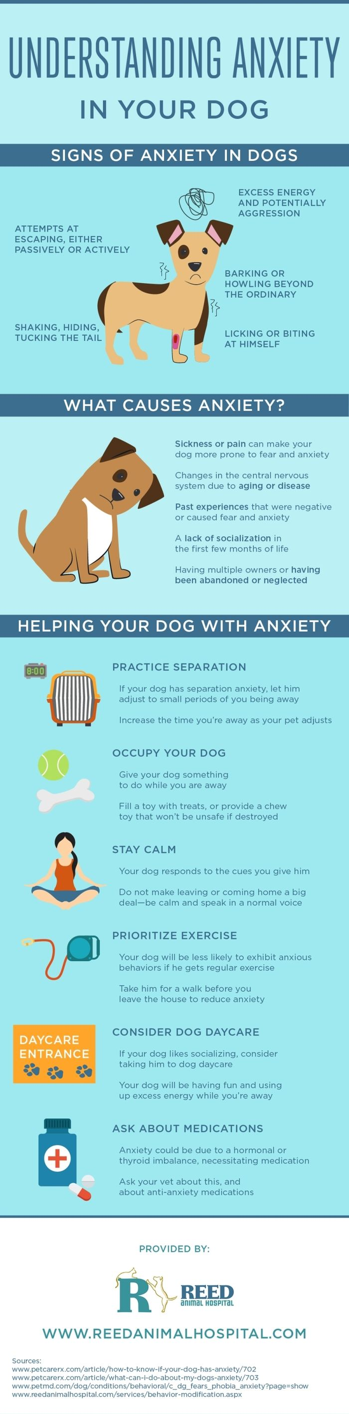 How To Help Your Dog Deal With Anxiety - Infographic