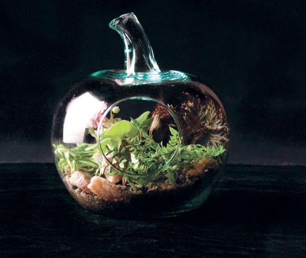 DIY: les terrariums, des écosystèmes miniatures! | Décormag