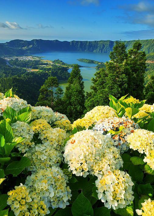 Azores, lake, hydrangeas, Portugal, Mountains