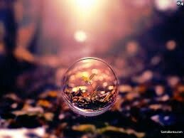 Plant in a water bubble