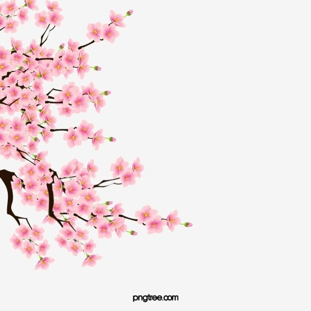 Cherry Blossoms Cherry Blossom Clipart Pink Plant Png Transparent Clipart Image And Psd File For Free Download Cherry Blossom Drawing Cherry Blossom Painting Acrylic Cherry Blossom Painting