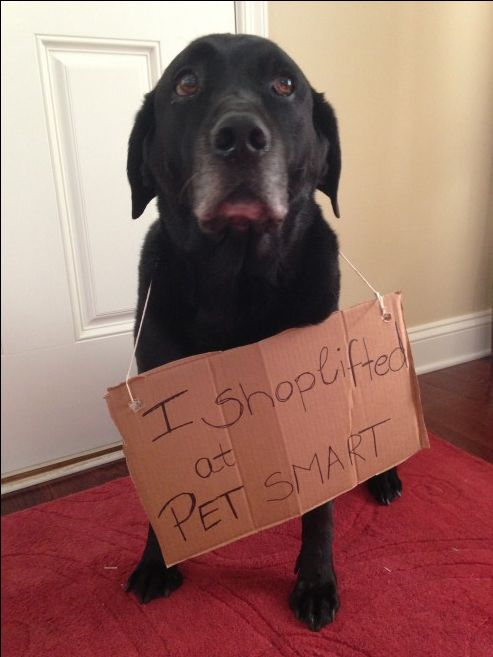 I shoplifted at PETSMART.