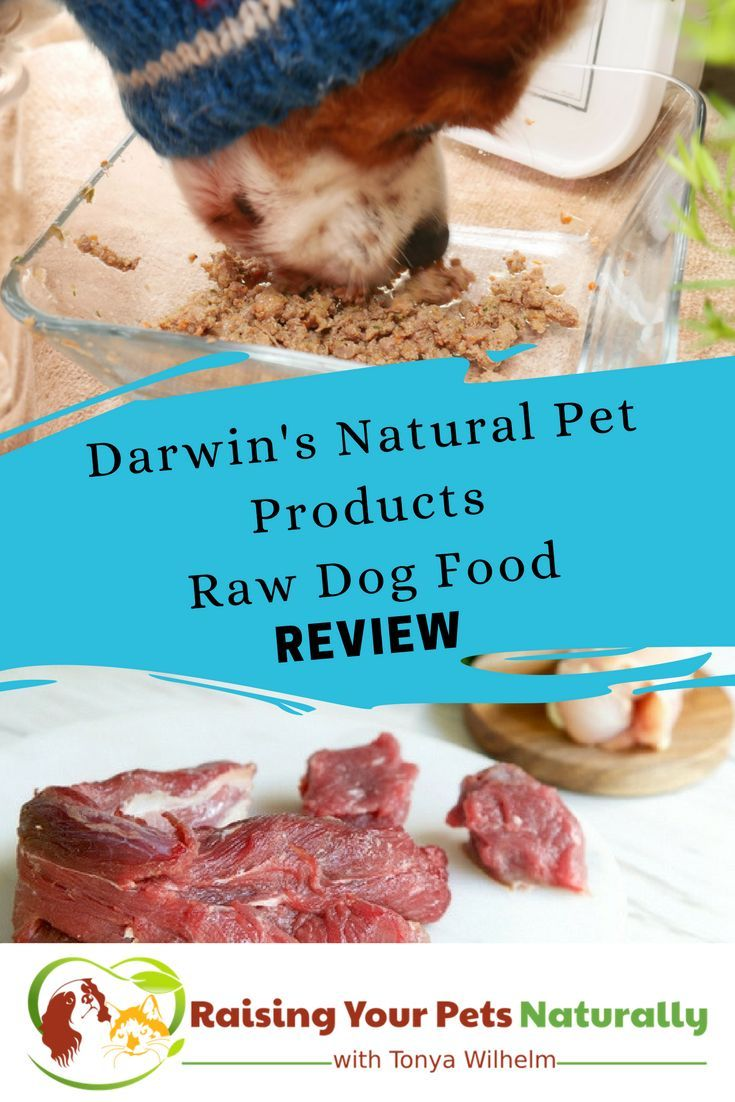 Review Of Darwin S Raw Diet Dog Food