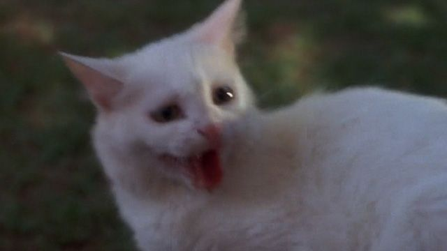 Sweetie Petey is a white cat owned by a woman (Frances Bavier) who is chased by a dog every day and apparently enjoys it in the debut film of canine star Benji (1974).