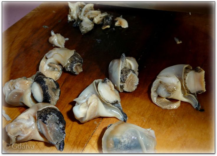 Sea snails are very delicious, more yield and less work than clams or mussels