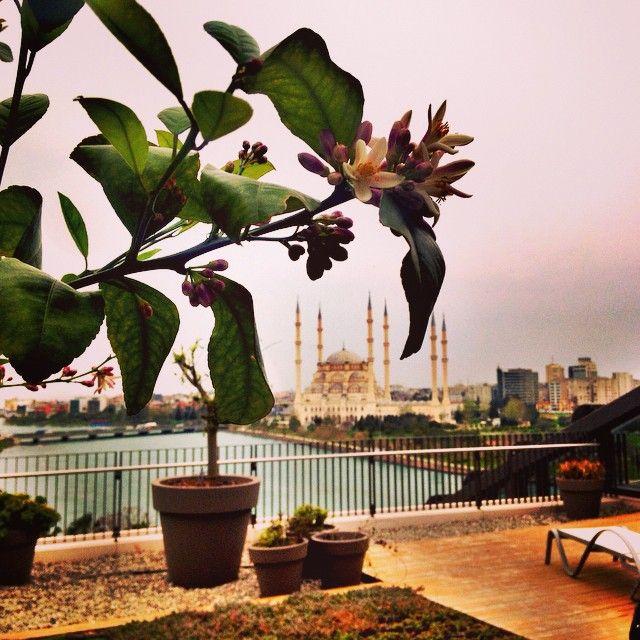Adana portakal çiçeği kokularıyla baharı karşıladı. Gelin siz de teraslı suitlerimizde bu keyfi yaşayın! / Adana welcomes spring with the scent of orange blossoms. Come and enjoy it at our suites with terrace!