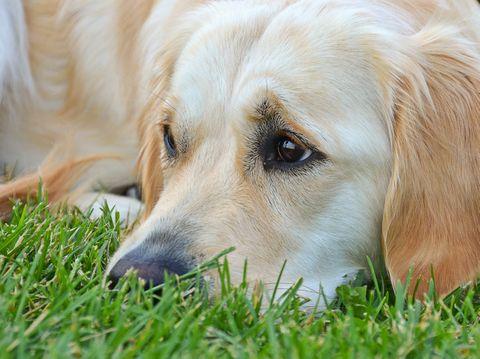Jeg har set det mange gange – hunde, der bliver hjælpeløse. De giver op, fordi de ikke kan påvirke deres situation. I stedet bliver de indadvendte, passive og stille.