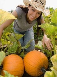Tips for growing pumpkins.