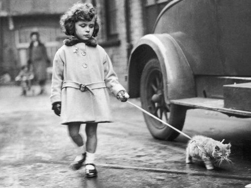 little girl and cat: Cat Club, Little Girls, Catwalks, Cat Walks, Baby Animal, Kittens, Vintage Photo, National Cat, Crystals Palaces