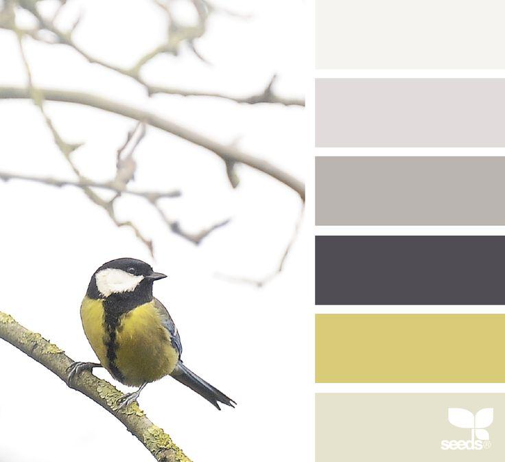 color perch | design seeds | Bloglovin'
