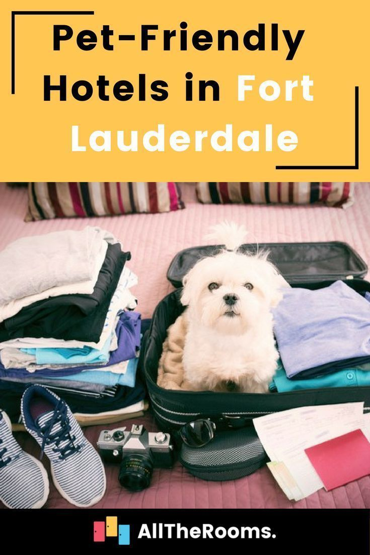Best Pet Friendly Hotels In Fort Lauderdale Alltherooms