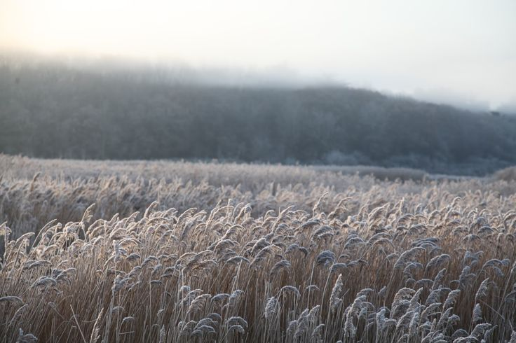 What a beautiful start to december we had over here! Bright crisp days and frosty mornings. Sadly we have been indoors through most of th...
