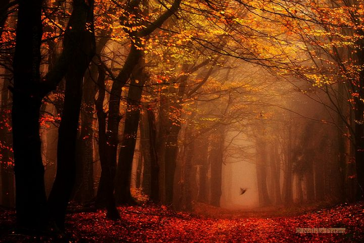 Capturing the Hauntingly Beautiful Atmosphere of the Dutch Woodlands