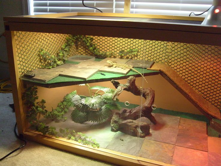 DIY bearded dragon habitat
