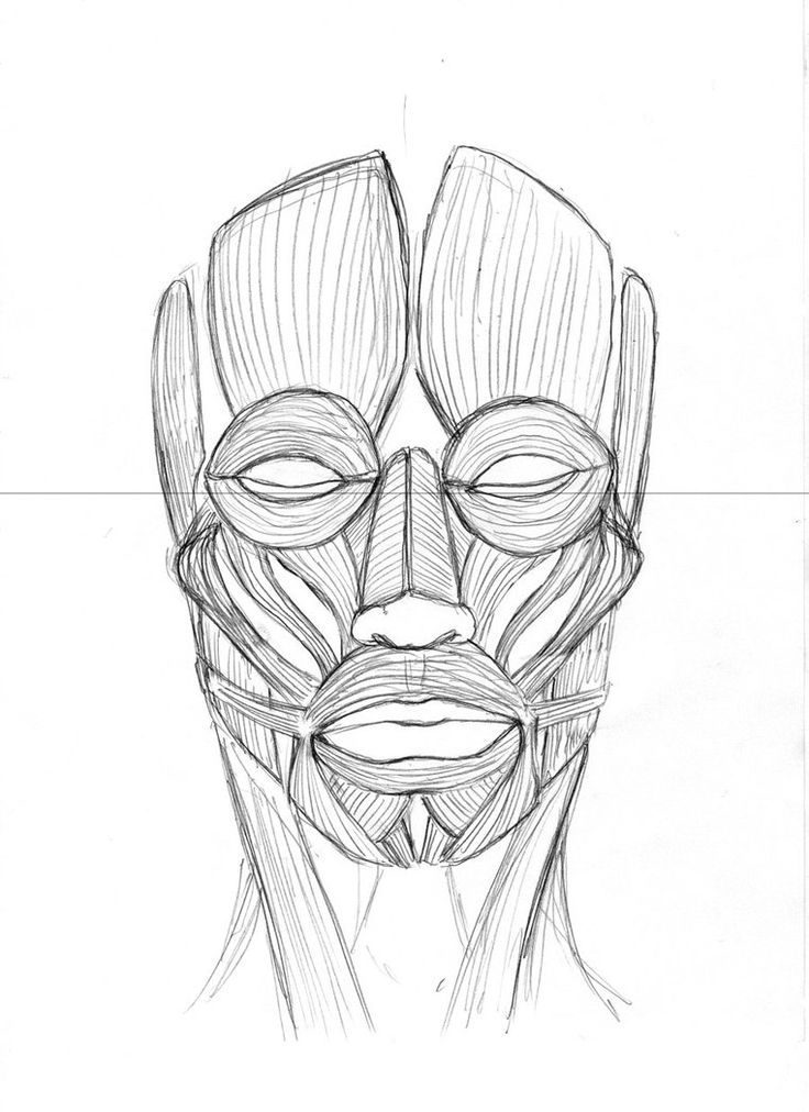 front view  muscles of the face by stevegibson on deviantart