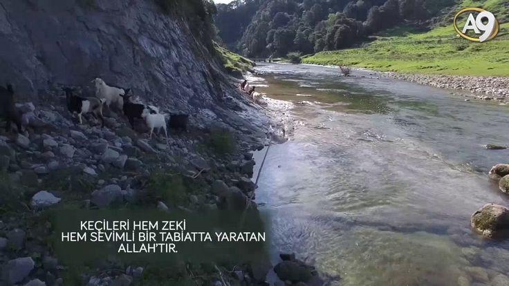Sevimli keçiler hakkında bilmedikleriniz..