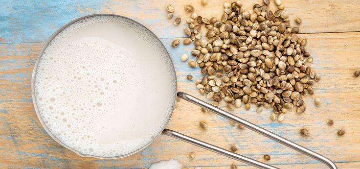 Hanfmilch & Hanfdrink: Wie gesund ist der Milchersatz?