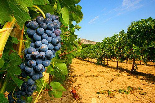 Ruta del vino en Querétaro   Artículos   Revista Tu Ambiente