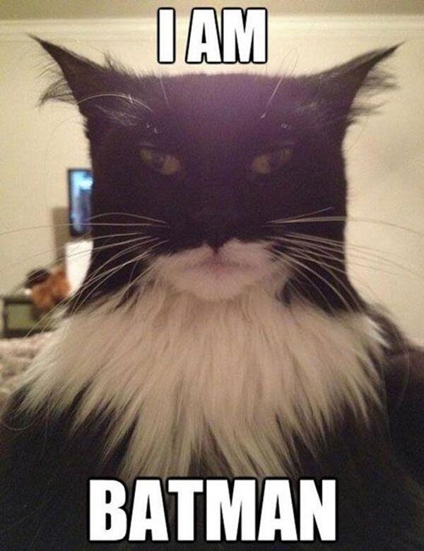Da da da da da da da da da BATMAN or catman