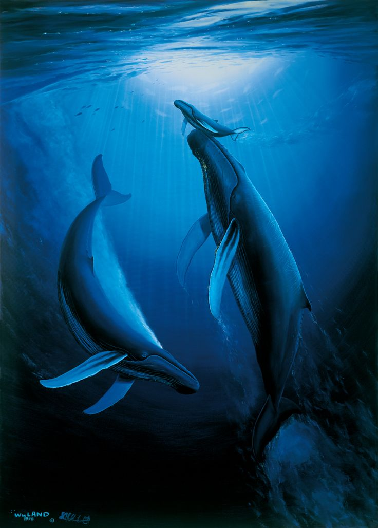 Whales by Wyland