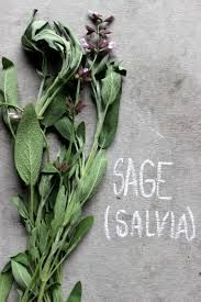 Sage has traditionally been used for a wide variety of health conditions including digestive disorders, nervous conditions and infections due to its high volatile oil content.  https://happyhormones.com.au/hormonal-imbalance/46980/