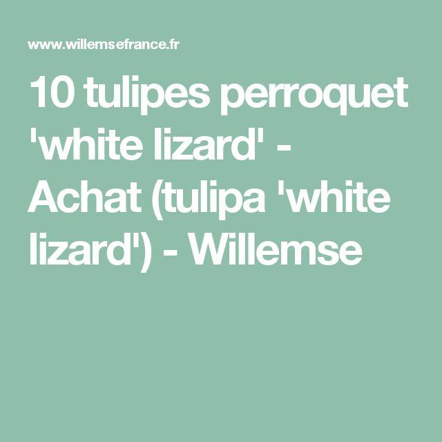 10 tulipes perroquet 'white lizard' - Achat (tulipa 'white lizard') - Willemse