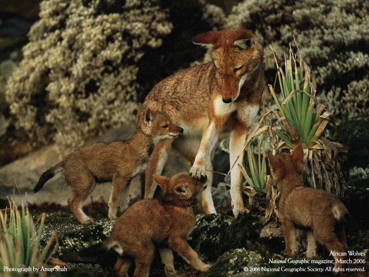 La maternidad, www.layaale.com / vb, Noches occidentales comunitarias, maternidad