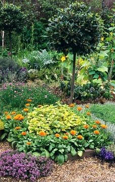 Kitchen garden with herbs and flowers as companion planting. Potager (ornamental vegetable/kitchen garden)