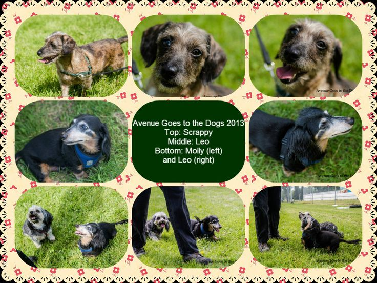 A photographer @AveGoestoDogs12 took these amazing shots of the gang! I put them in a collage. The pics were actually Avenue goes to the dogs 2013.